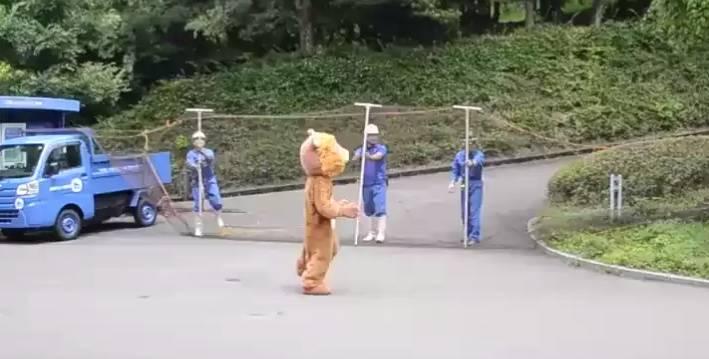 Учения зоопарка в Японии по ловле льва рассмешили людей и удивили хищников