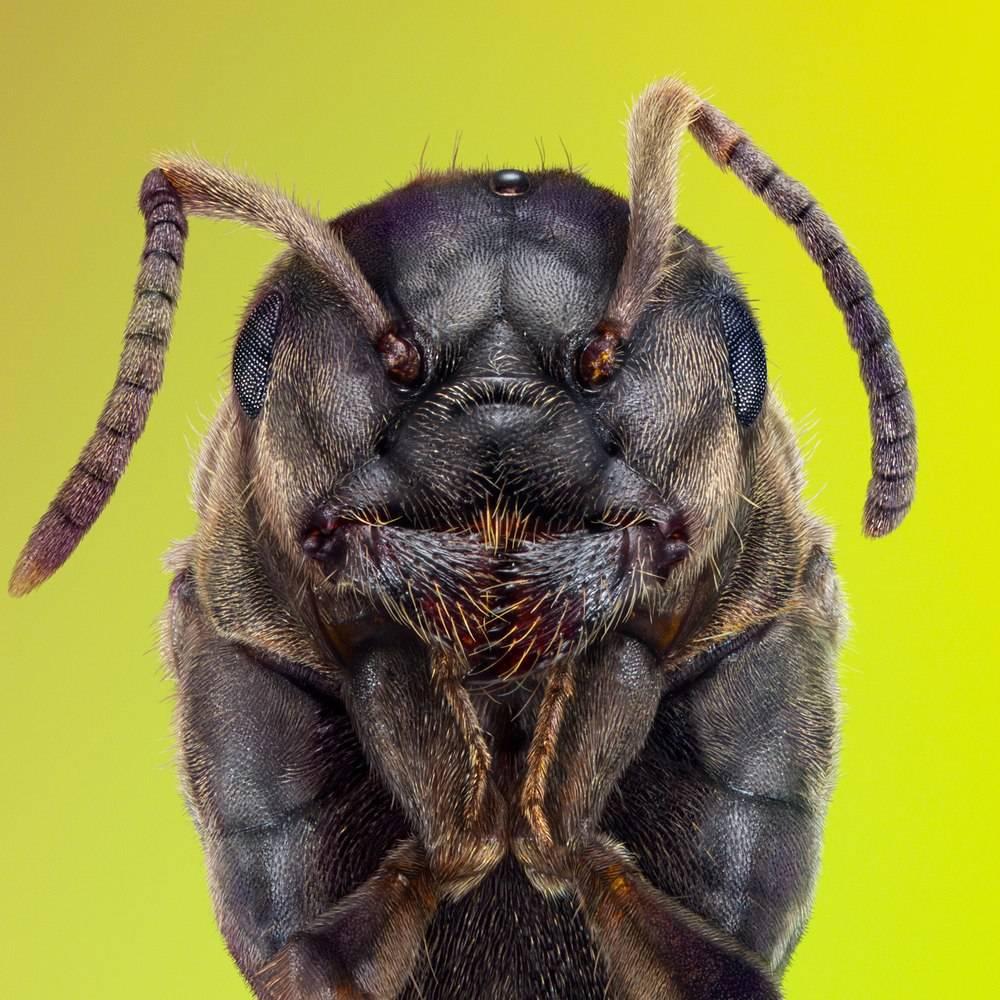 Головы разных насекомых