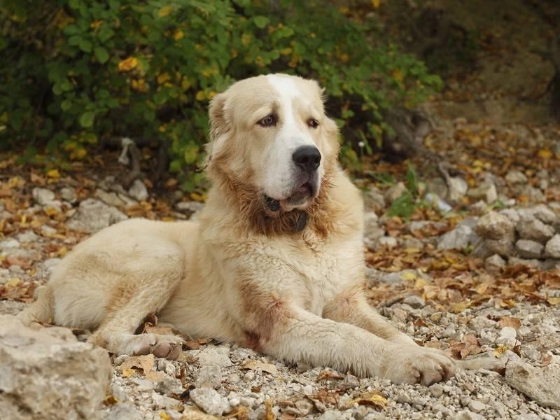 Собака-герой, спасшая многодетную семью на Урале, вернулась домой после пожара