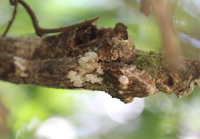 Найдите геккона на фотографии