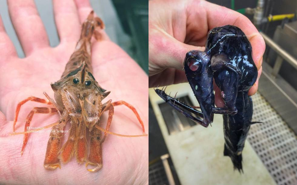 Новые фото глубоководных мостров от рыбака из Мурманска