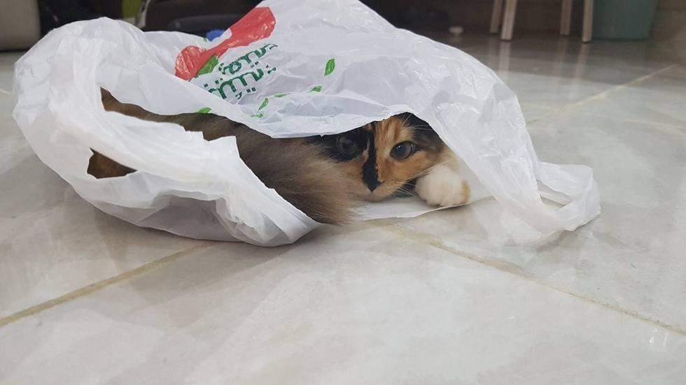 Чей кот самый милый