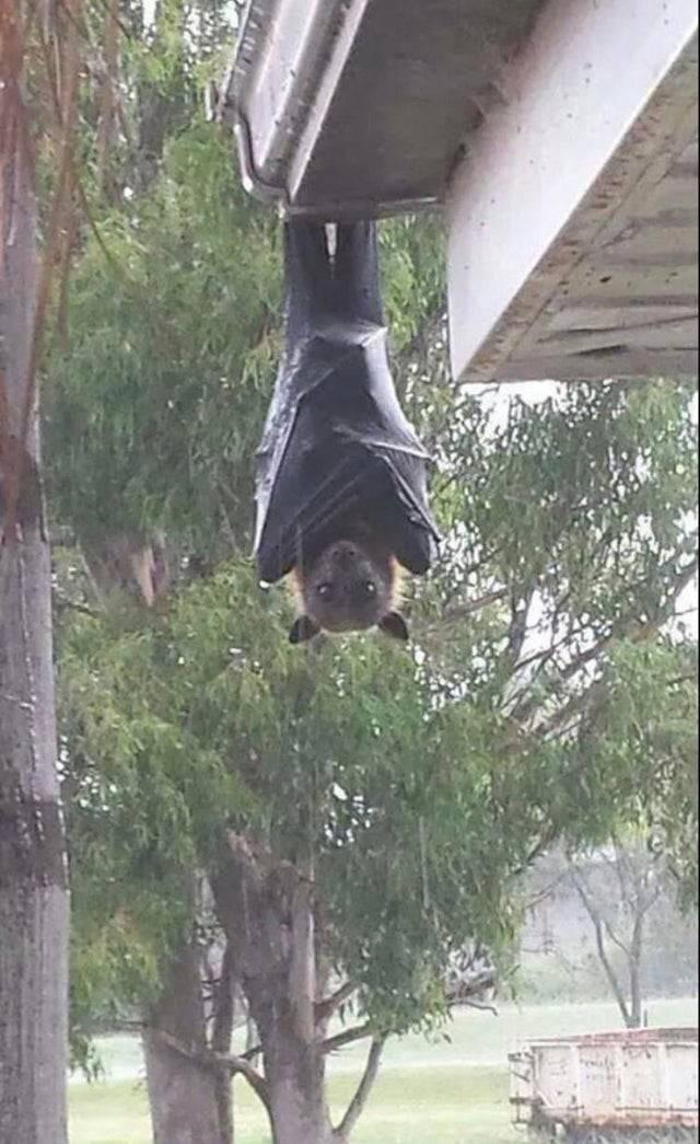 фото из Австралии, посмотрев на которую, не захочется туда ехать
