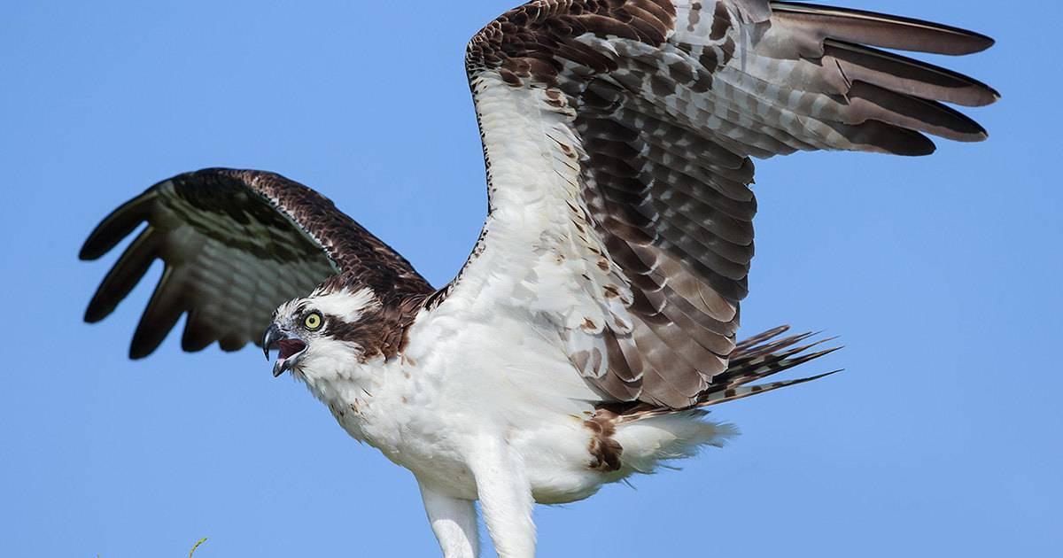 Раскрыто значение цвета перьев для полета птиц
