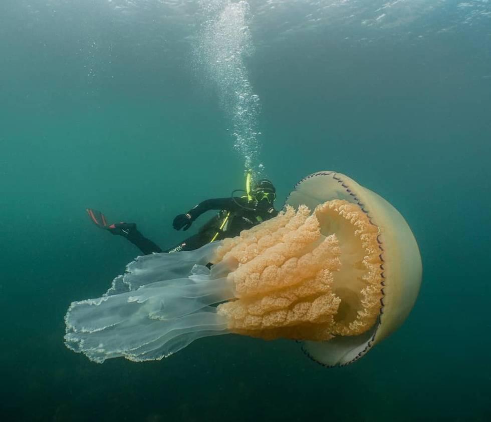Дайверы наткнулись на огромную медузу размером с человека