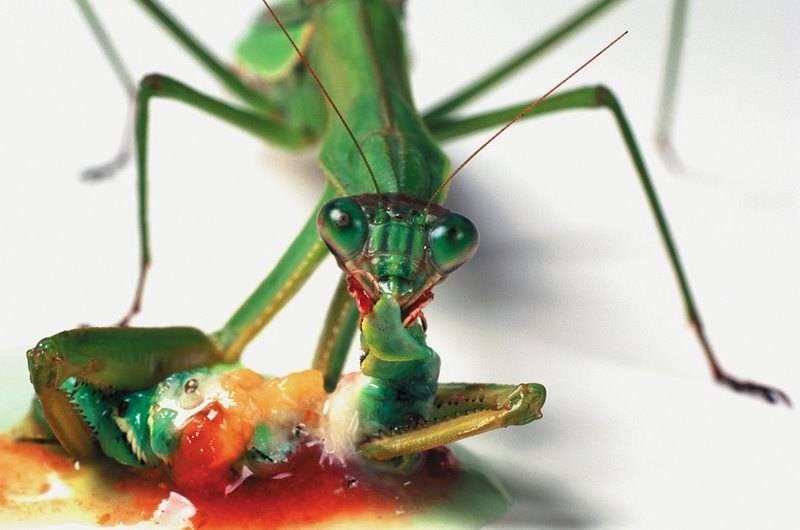 Хищники и жертвы в мире насекомых