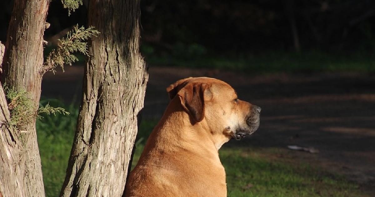 Собака двое суток бежала к бросившим её хозяевам в Красноярск