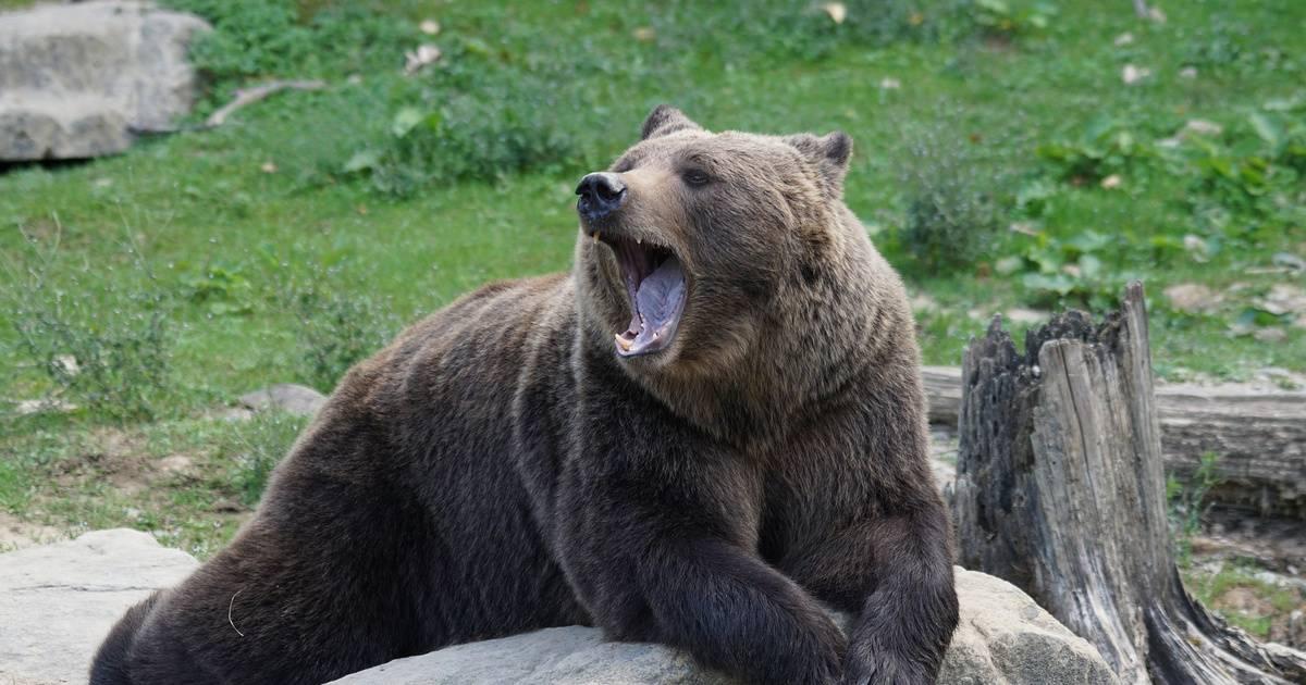 Учёные рассказали, как избежать нападения медведей