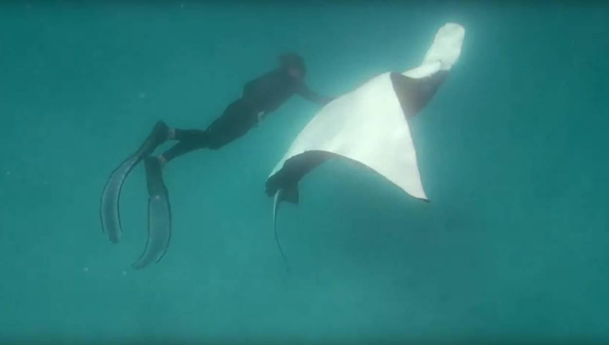 Дайвер спас морского дьявола, попросившего у него помощи