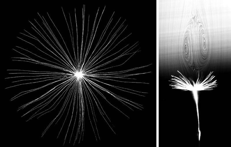 Ученые раскрыли секрет полета семян одуванчика