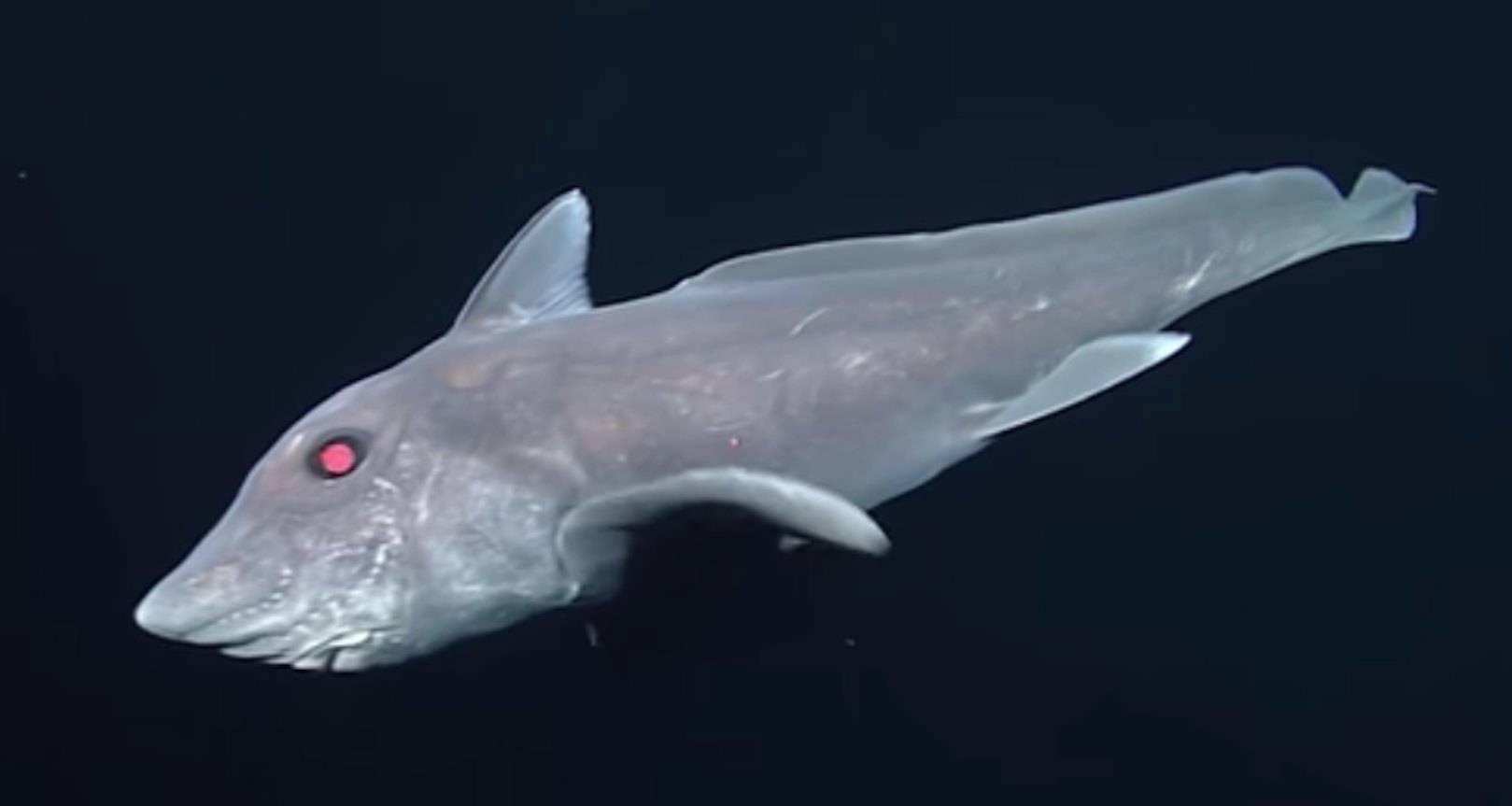 Акула-призрак, педшественница динозавров
