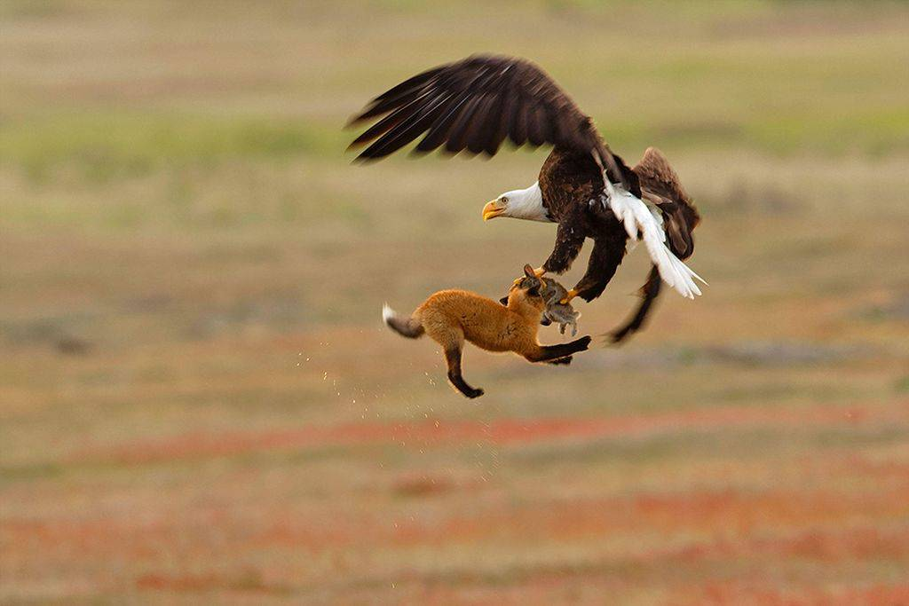 Птицы на снимках лучших фотографов мира