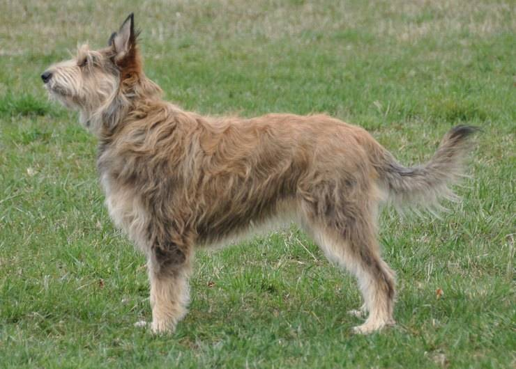 редкие породы собак