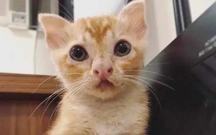 Котенка с необычной внешностью нашли на улице Гонконга